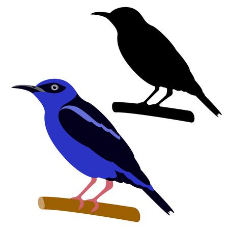 honeycreeper bird vector illustration flat style black silhouette profile