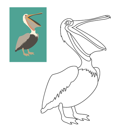 pelican vector illustration flat style coloring page outline royalty