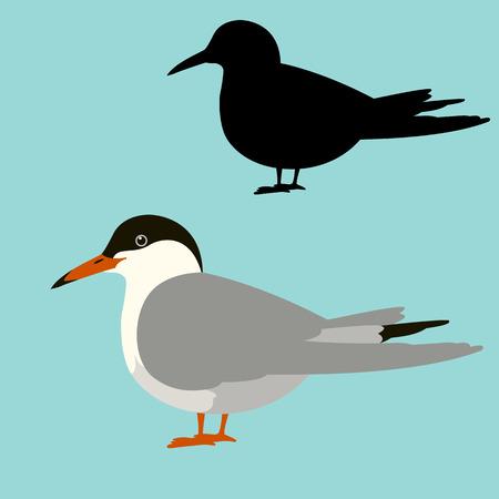 gull vector illustration