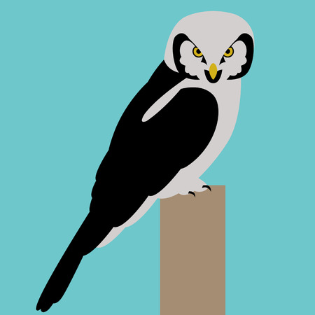 Hawk owl bird face vector illustration flat style profile side Vectores