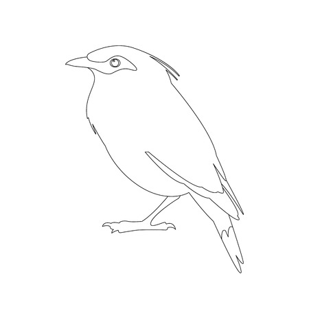 bali mynah bird vector illustration