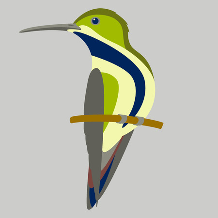 Colibri bird vector illustration flat style, profile side.
