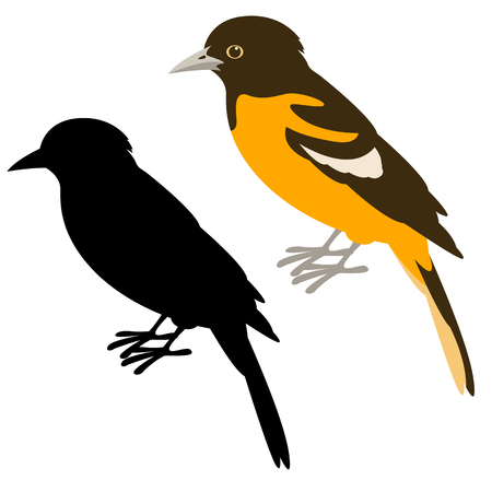 Baltimore oriole vector illustration style plat