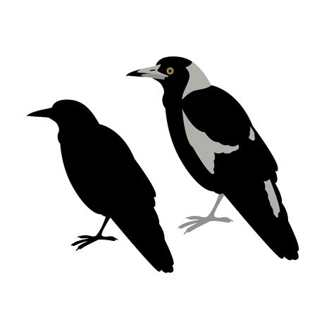 australian magpie vector illustration flat style profile side black silhouette Çizim