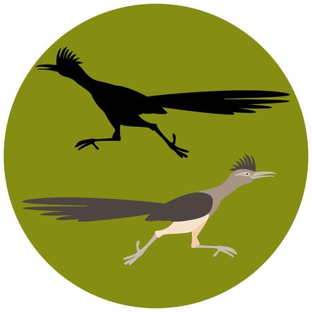 Roadrunner bird running  vector illustration flat style black silhouette set