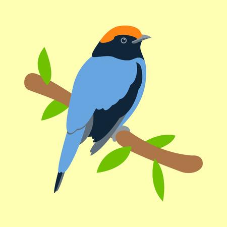 bird flycatcher vector illustration flat style  profile side