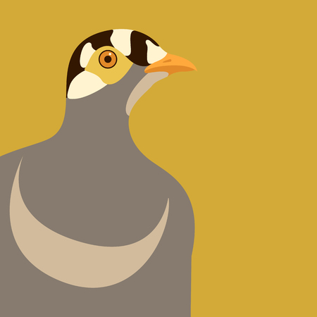 bird killdeer  vector illustration flat style profile side Illustration