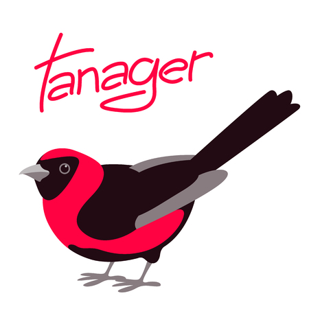 bird  tanager  vector illustration flat style profile side  Illustration
