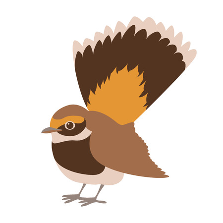 flycatcher rufous fantail vector illustration flat style profile side