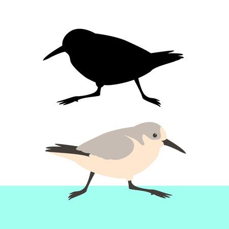 Sandpiper bird vector illustration flat style black silhouette Illustration