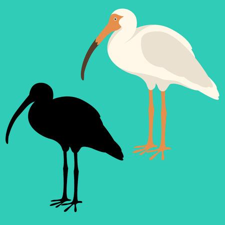 white ibis  vector illustration flat style  black silhouette  Illustration
