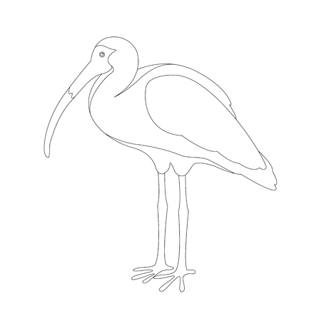 white ibis vector illustration  coloring book profile side