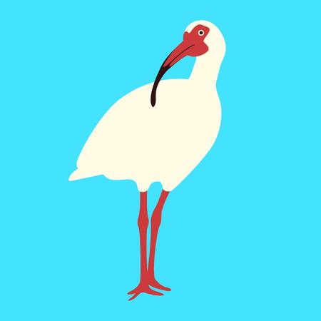 white ibis  bird   vector illustration flat style   blue background Illustration