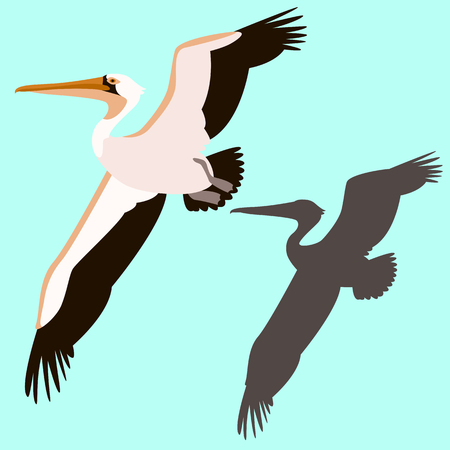pelican bird vector illustration flat style silhouette black