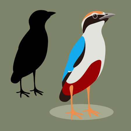 indian pitta bird  vector illustration flat style black silhouette set Иллюстрация