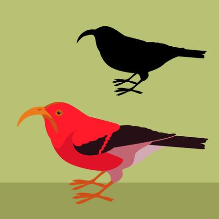 scarlet hawaiian honeycreeper bird vector illustration black silhouette set