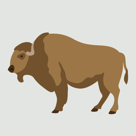adult buffalo vector illustration flat style  profile side 向量圖像