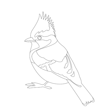 himalayan tit bird vector illustration  coloring book line drawing
