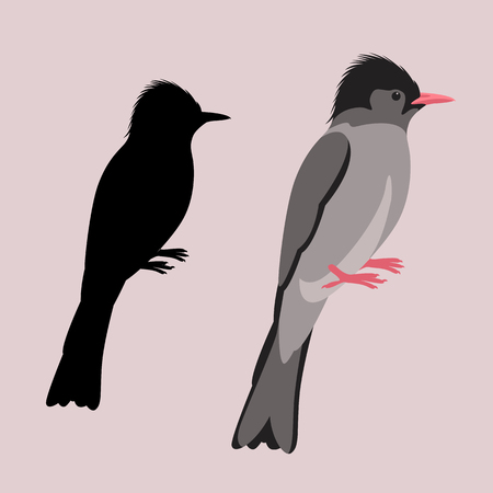 himalayan black bulbul bird vector illustration flat style black silhouette set