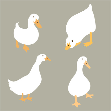 duck white set vector illustration flat style Stock Illustratie