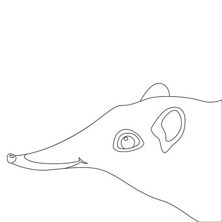 giant elephant shrews animal vector illustration lining draw
