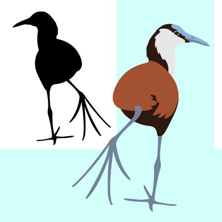 bird jacana african vector illustration flat style black silhouette Illustration