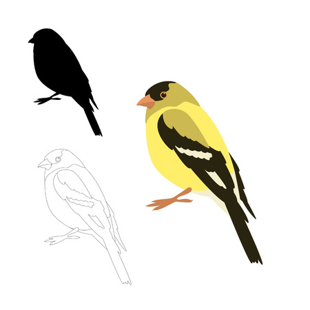 gold finch bird vector illustration flat style black silhouette