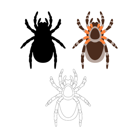 spider  vector illustration flat style front side coloring silhouette