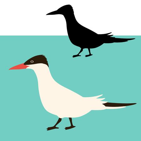 arctic tern bird vector illustration flat style black silhouette set