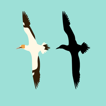 northern gannet bird vector illustration flat style silhouette set