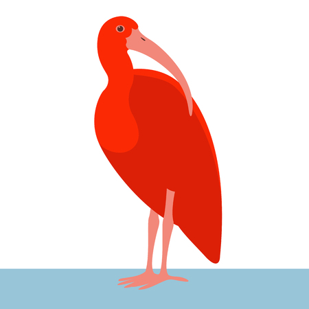 ibis bird vector illustration flat style profile side