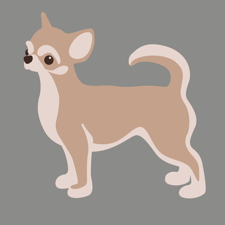chihuahua dog vector illustration flat style profile side