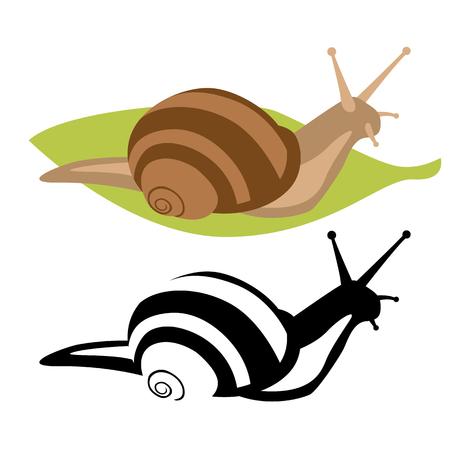 snail  vector illustration  flat style  profile side  set 일러스트