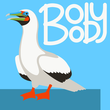 booby bird  vector illustration flat style profile side