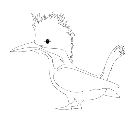 bird male crested kingfisher vector illustration coloring book