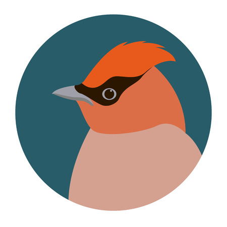 waxwings  head vector illustration flat style profile side