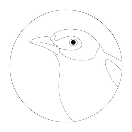 black-tailed tityra bird head vector illustration  lining draw Ilustração