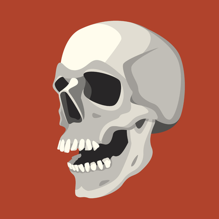 human skull vector illustration flat style profile side