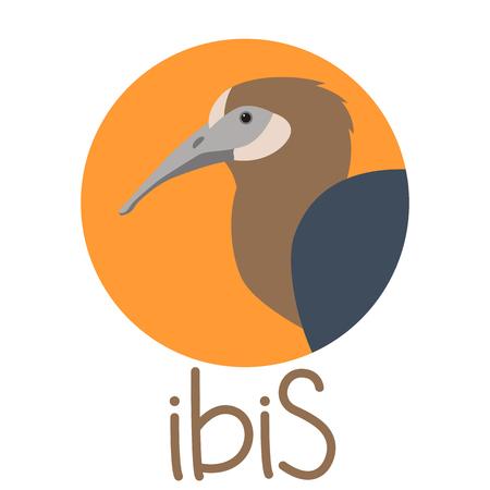 bird   ibis  head vector illustration profile view Illustration