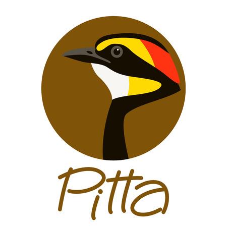 bird    pitta  head vector illustration profile view