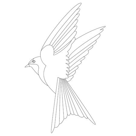 bird swallow  vector illustration    lining draw  profile view Ilustração