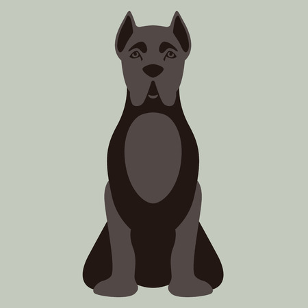 dog corso vector illustration flat style front view