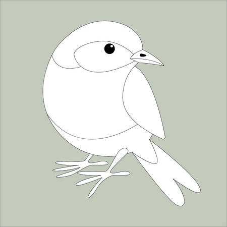eastern bluebird, lining draw , front view