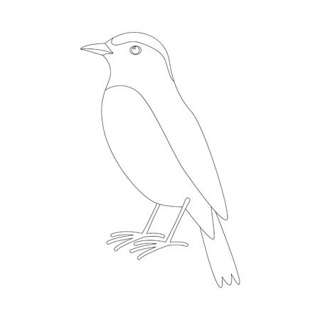 arabian wheatear bird ,vector illustration ,  lining draw Ilustração