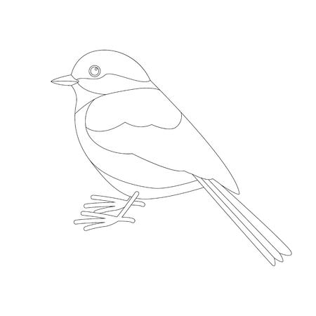 tit bird , lining draw  ,profile  view
