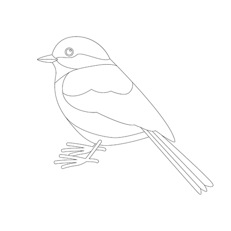 tit bird , lining draw  ,profile  view