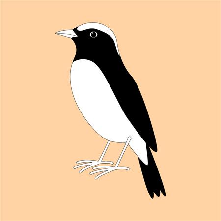 arabian wheatear bird ,vector illustration , profile view