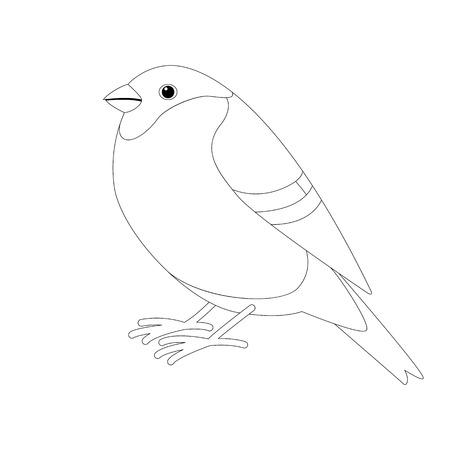 bullfinch bird , lining draw  ,profile view Ilustração