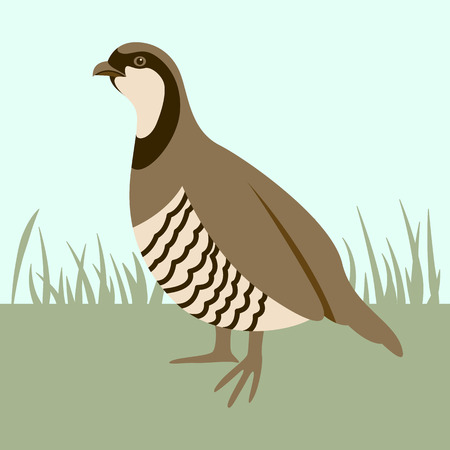 bird  quail, vector illustration ,flat style, profile view