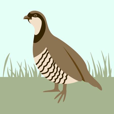 bird  quail, vector illustration ,flat style, profile view